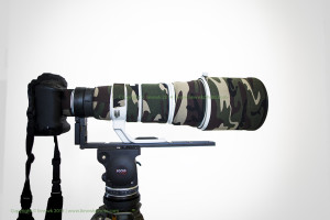 Cartoni FOCUS HD with Canon 500mm F4 and 1dx